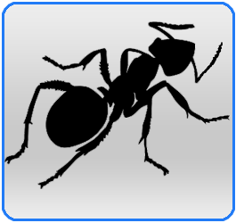 Insects Bolton Pest Control